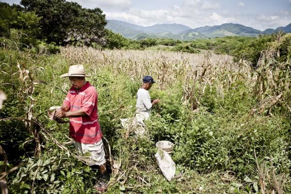 21. La milpa que fue comprada con el dinero que enviaba Maldonado es la fuente principal de ingresos de su familia.